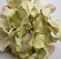 Paper Parchment Hydrangeas Light Green