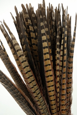 Pheasant Feathers 18in | Pack of 100