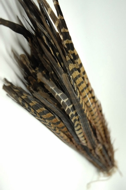 Pheasant Feathers 26in | Pack of100