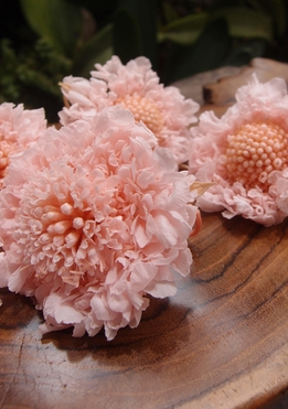 Pincushion Scabiosa Flowers Bridal Pink Preserved (5 flowers)