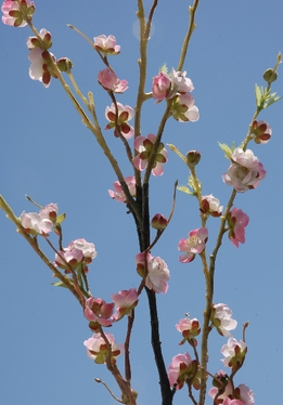 "Pink Cherry Blossom Branches Silk (42"")"