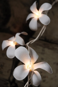 Plumeria Flower String Lights | White