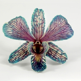 Preserved Butterfly Teal Blue Orchids (30 flowers)