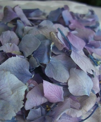 Preserved Flowers Hydrangea Flower Petals Lavender (natural)