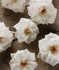 Preserved French Noisettes Roses Natural Bridal White (12 rose heads)