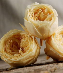 Preserved Natural Morning Yellow Roses (8 rose heads) Flowers