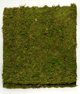 Preserved Natural Moss 18 x 16 Mat