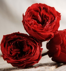Preserved Natural Red Roses (8 rose heads)
