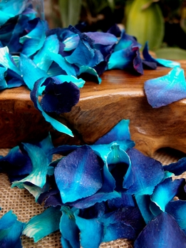 Preserved Orchid Petals Dark Blue box