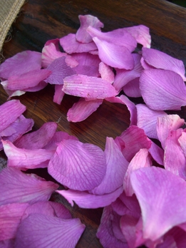 Preserved Orchid Petals Purple