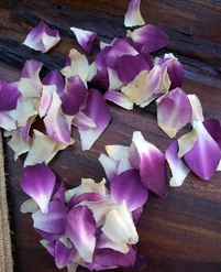 Preserved Orchid Petals Purple and White