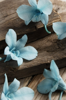 Preserved Orchids Soft Blue Natural (8 flowers)