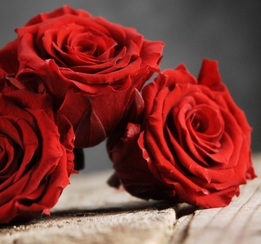 "Preserved Queen Red Roses (6-2.5"" rose heads) Flowers"