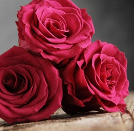 "Preserved  Raspberry Red Franboise Roses    (6-2.5"" rose heads) Flowers"