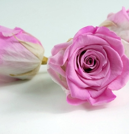 "Preserved Rose Heads 2.5"" Bright Pink & White Roses"