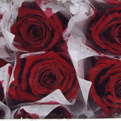 Preserved Roses Burgundy 1in (12 rose heads)