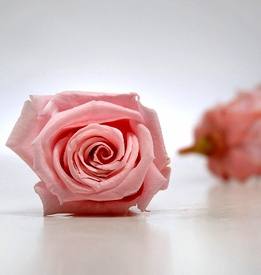 Preserved Rose Heads Pink (15 Roses)