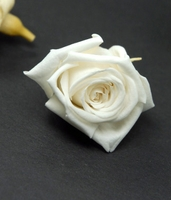 "Preserved Roses 1"" Rose Heads White (12 roses)"