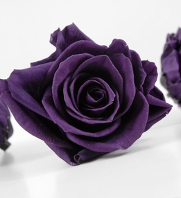 "Preserved Roses 3"" Large Deep Purple Rose Heads (4 roses)"