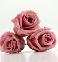 Preserved Roses Cherry Blossom Pink 1.5in (12 rose heads)
