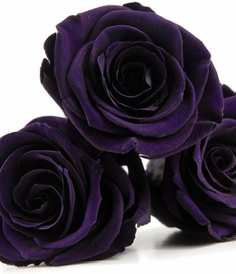 "Preserved Roses Fancy Purple 2.5"" Rose Heads (6 roses)"