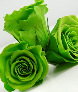 "Preserved Roses Green 2.5"" Rose Heads"