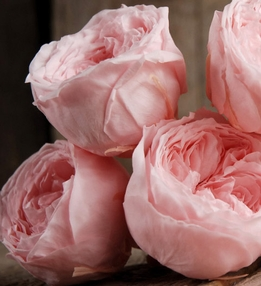 Preserved Roses Natural Bridal Pink Temari (8 rose heads) Flowers