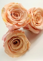 "Preserved Roses Peach 2.5"" Rose Heads"