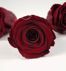 "Preserved Roses Red 2.5"" Size"