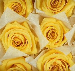 "Preserved Roses Yellow 1"" wide (12 roses)"