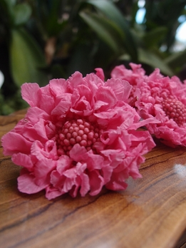 Preserved Scabiosa Flowers Natural Dark Pink Pincushion (5 flowers)