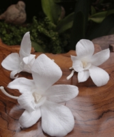 Preserved Soft Orchids White Natural (8 flowers)