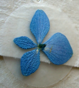 Pressed Flower Envelope Seals Blue Hydrangea Petals (12 stickers/pkg)