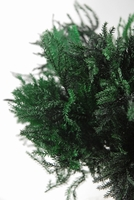 Princess Pine Dyed Dark Green Preserved Fern 20 stems