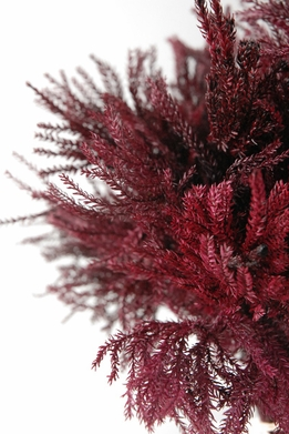 Princess Pine Fern Burgundy Preserved Foliage
