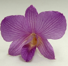 Purple Mauve Natural Orchids Preserved Flowers (30 flowers)