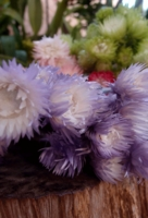 Purple & Silver Daisies Preserved