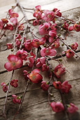 Quince Branches Artificial Burgundy Red 45 in.