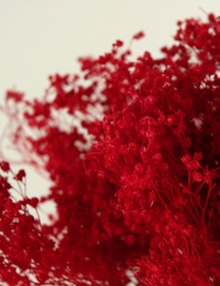 Baby's Breath Red Bundle 18in