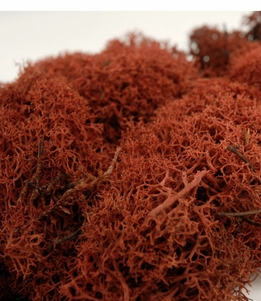 Reindeer Moss 11 oz. bag Sienna Brown