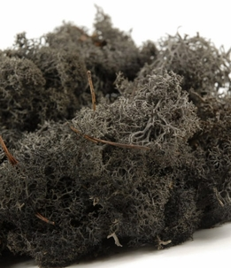 Reindeer Moss Black 11 oz. bag