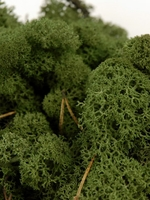 Reindeer Moss Dark Green 11oz