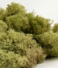Reindeer Moss Light Green 11 oz. bag