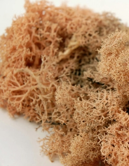 Reindeer Moss Peach Apricot 11 oz. bag