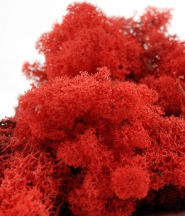 Reindeer Moss Red 11 oz. bag
