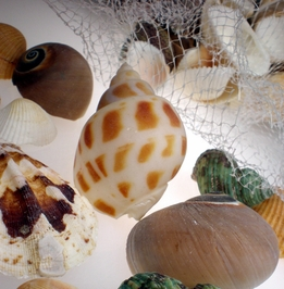 Shells  - Beach Glass- Fish Nets