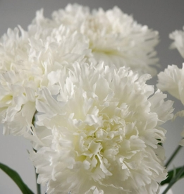 Silk Carnations White (12 Flowers)
