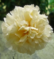 Silk Carnations Yellow (12 Flowers)