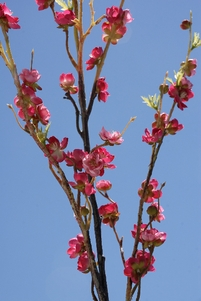 Cherry Blossom Branches Dark Pink 42�