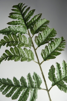 Silk Leather Fern Leaves (72 leaves)